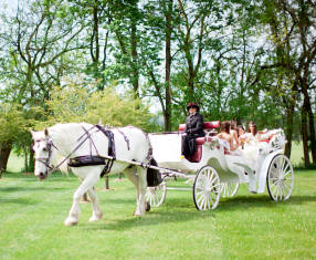 Abby_Joe_carriage